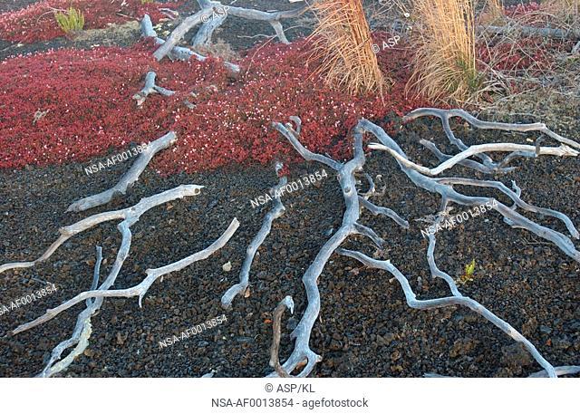 Volcano National Park - Big Island of Hawaii - Desolation Trail