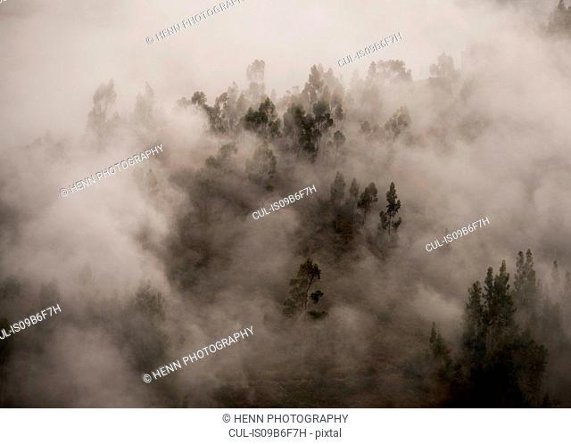 Morning fog in a forest above Tarma, Junin, Peru, South America