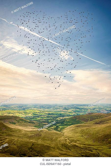Heart shaped flock of birds flying above the Brecon Beacons, Wales, UK