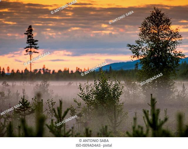 Mist and trees at sunset, Storforsen, Lapland, Sweden