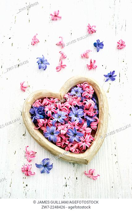 Heart shaped container filled with Hyacinth florets varietes Pink Pearl and Blue Star