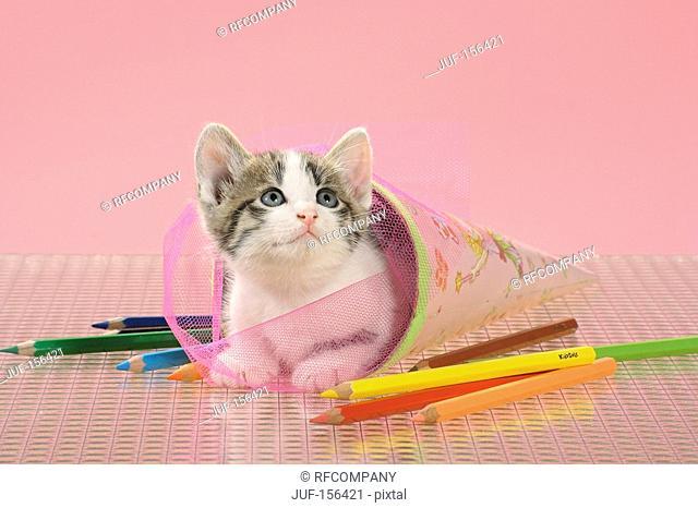 domestic cat - kitten lying in a school cone