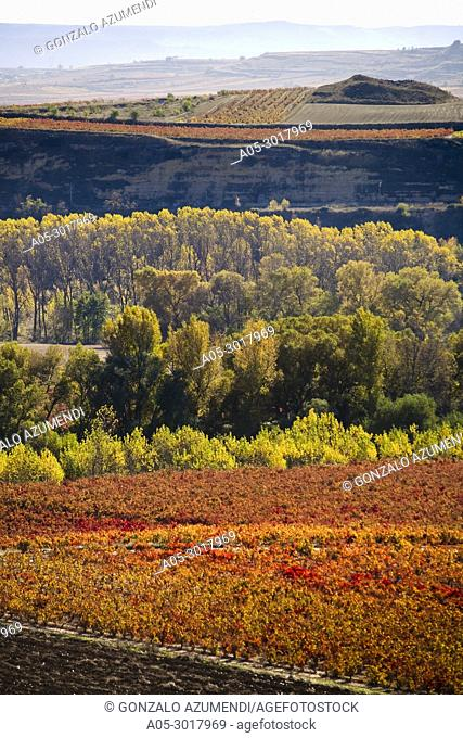 Landscapes and Vineyards in Autum between La Rioja and Alava. Next to Laguardia. Spain