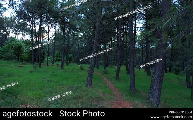 Person with a safety suit in a forest area. Ayegui, Navarre, Spain, Europe