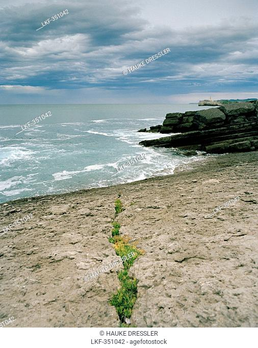 Plants in a crevice, coastal landscape near the city park, Santander, Cantabria, Spain