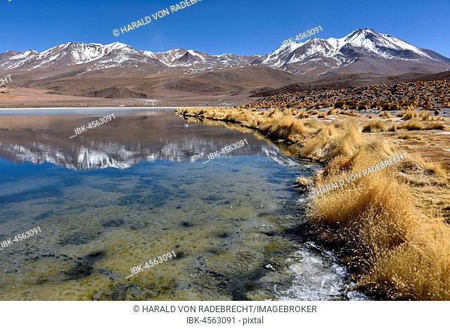 Laguna Cañapa, Upper Andes, Altiplano, Potosi, Uyuni, Bolivia, South America