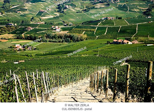 Vineyards, Barolo, Langhe, Piedmont, Italy