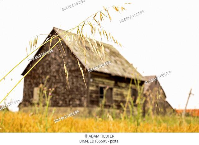 Dilapidated building in rural field