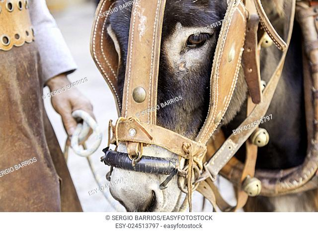 Donkey head, detail mammal animal farm.in Spain