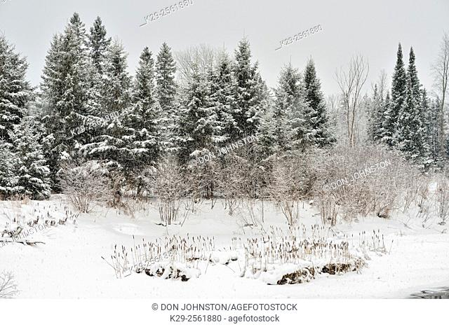 Fresh snow on the shores of Junction Creek, Greater Sudbury, Ontario, Canada