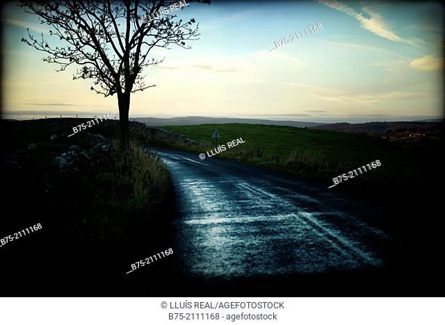 Rural road with a tree in the foreground at sunset. North Yorkshire, England, UK, Europe