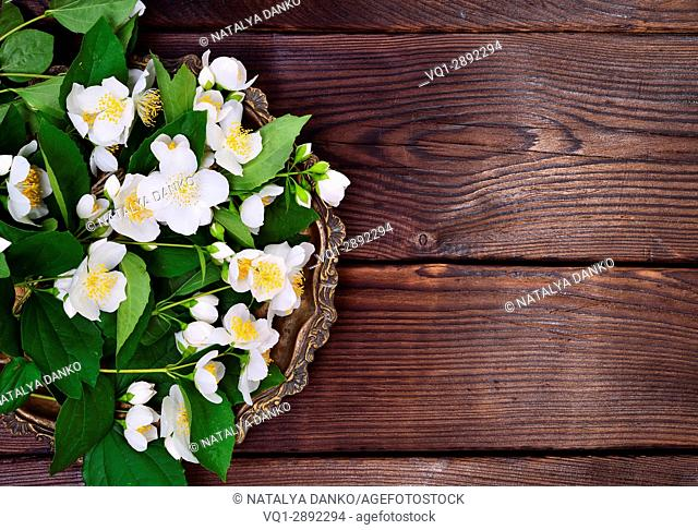 Flowering branches of jasmine with white flowers in a copper plate, empty space on the right