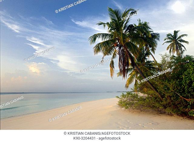 Sunny beach with palm trees of a small island within Meemu Atoll, Maldives, Indian Ocean, South Asia