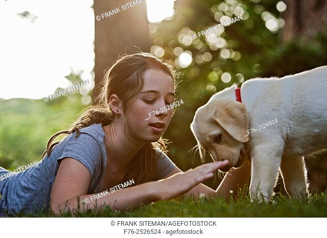 14 yeqr old girl training yellow labrador retriever puppy to lie down by use of hand signals. mr # 4862