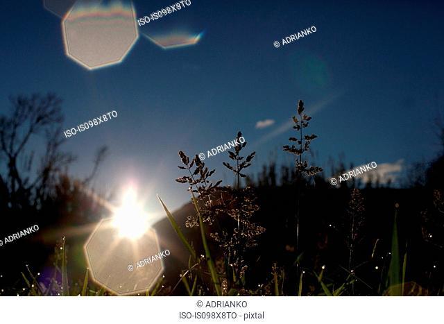 Meadow scene in sunlight