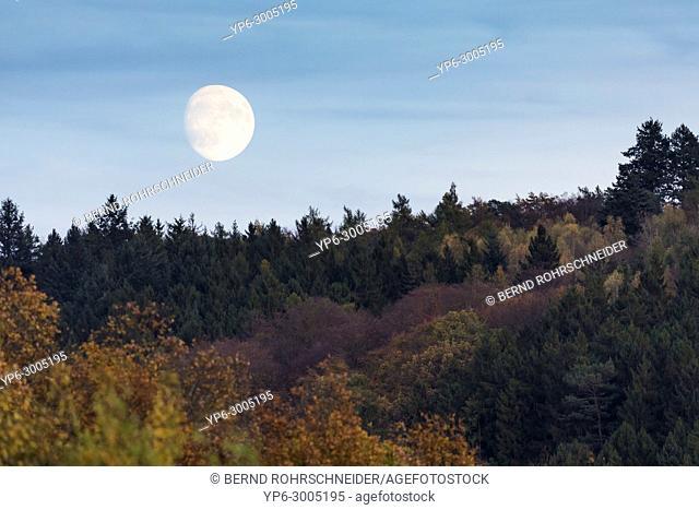 moonrise over forest in autumn, near Leiwen, Rhineland-Palatinate, Germany