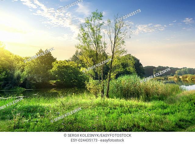 Trees on a green meadow near calm backwater