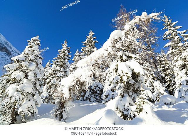 Valley Gaistal with snow during deep winter in Tyrol, Austria Mountain forest with snowed in trees Valley Gaistal is during summer and winter a well known and...