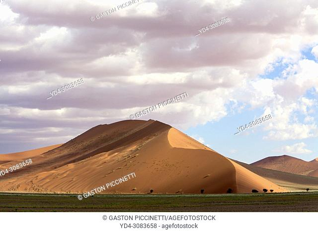 Beautiful colours in the desert in rainy season, Namib-Naukluft National Park, Namib desert, Namibia.