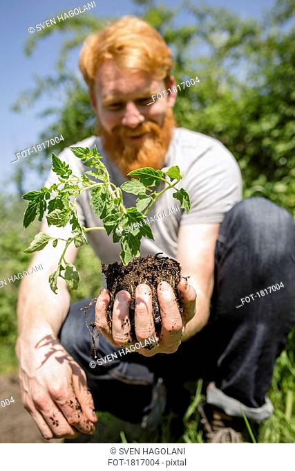 Man with beard holding sapling in sunny garden