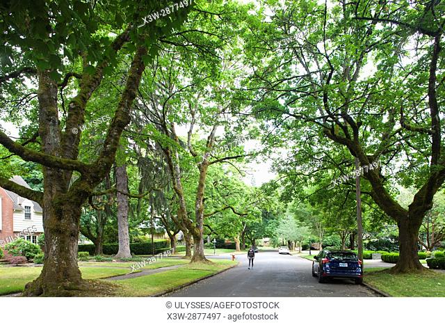 America, USA, State of Oregon, town of Portland, tree lined avenue