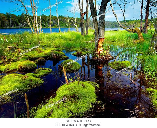 Poland, Pomerania Province, slupski district, Smoldzino. Ploski Forest, surroundings of Dolgie Male Lake, Slowinski National Park