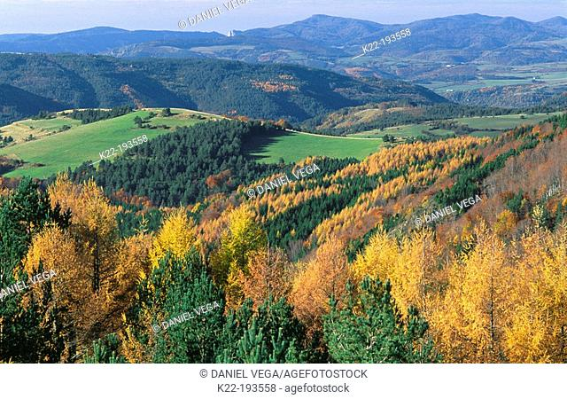 Firs and Beeches at Sierra de Abodi. Navarre. Spain