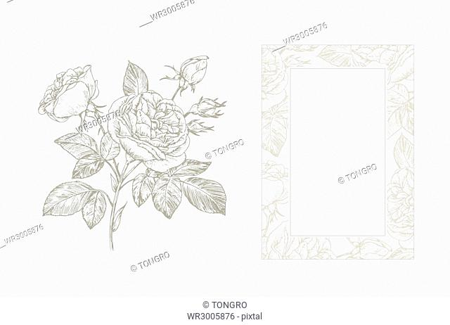 Pen drawings of roses and frame