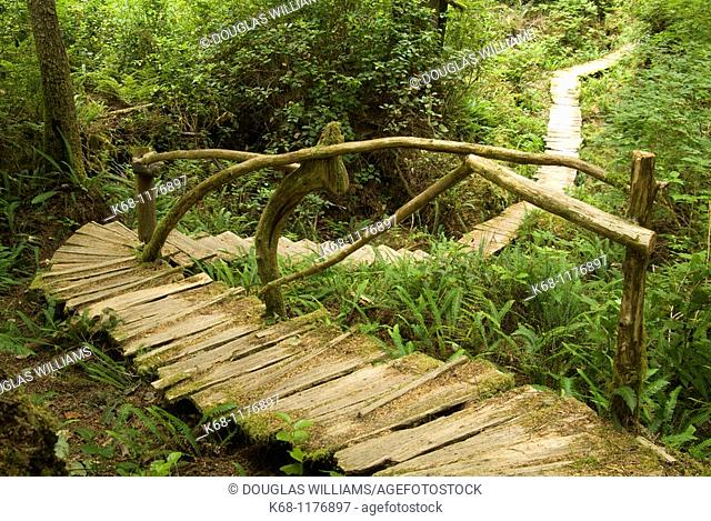boardwalk in forst, West Coast, Flores Island, British Columbia, Canada