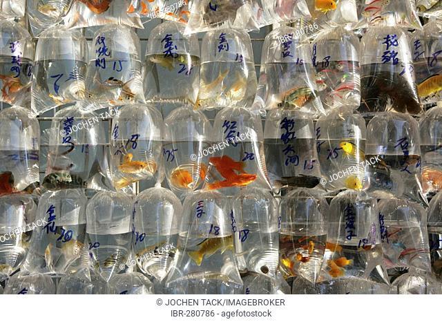 Goldfish market in Mong Kok, Kowloon, Hong Kong, China