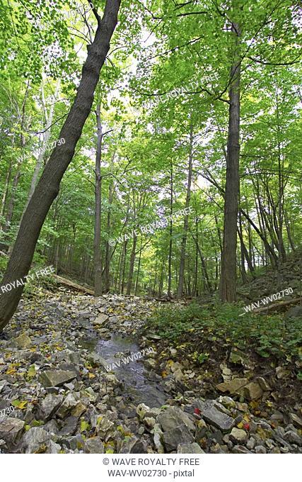 Small stream running over rocks through wooded area, Canada, Ontario, Hamilton