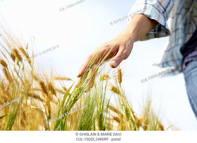 Hand of a woman caressing wheat field