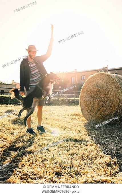 Man playing with dog in a harvested wheat field at sunset