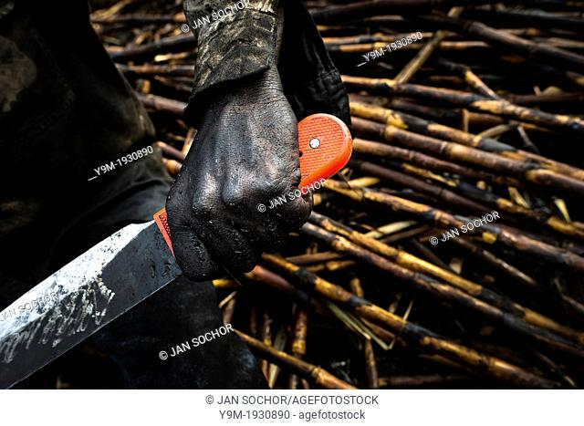 A sugar cane cutter holds his machete while working on a plantation near Florida, Valle del Cauca, Colombia, 30 May 2012 The Cauca River valley is the booming...