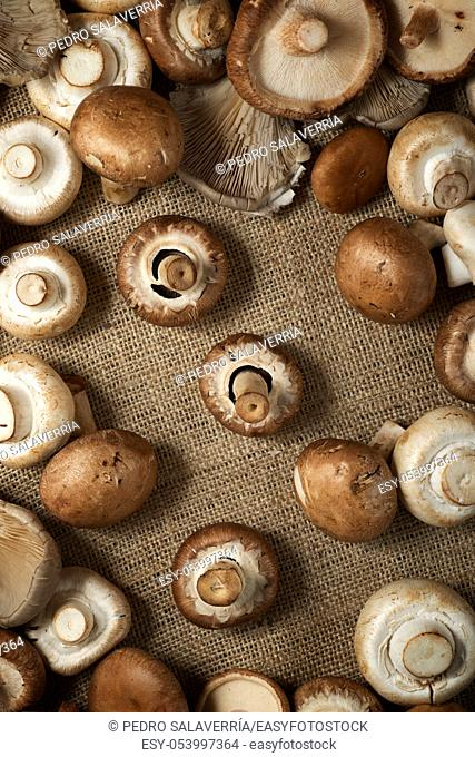 Mushrooms on a natural tablecloth