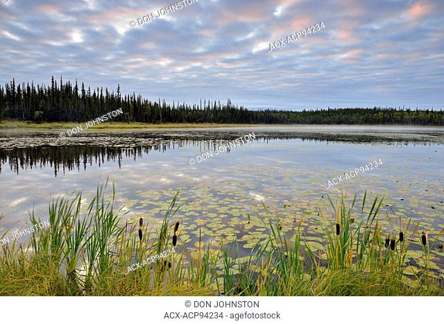 Morning clouds over a large beaver pond, Yellowknife, Northwest Territories, Canada