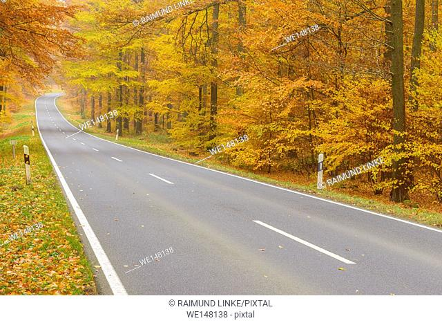 Country Road in Beech Forest, Autumn, Spessart, Bavaria, Germany