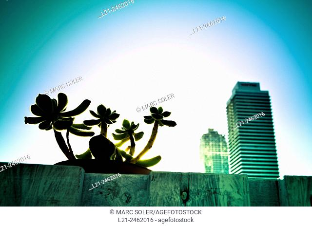Plants in a pot. Mapfre tower and Hotel Arts building at sunset. Barcelona, Catalonia, Spain