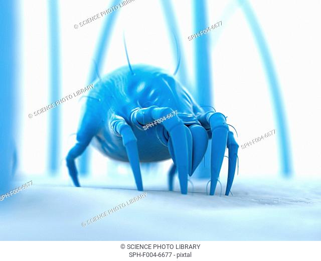 Dust mite. Computer artwork of a house dust mite Dermatophagoides pteronyssinus on human skin