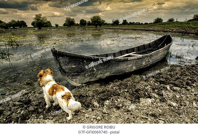 Dog and boat. The landscape disappeared