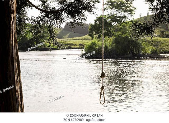 Rope swing hanging over the lake in Mc Laren falls park in Tauranga, New Zealand
