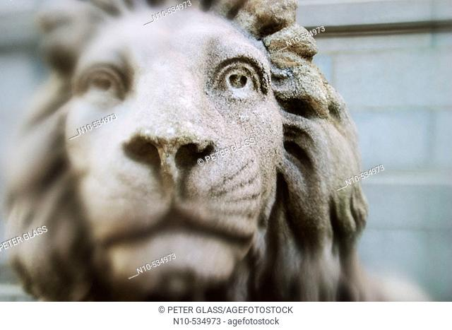 Close-up of an office building's stone lion's face