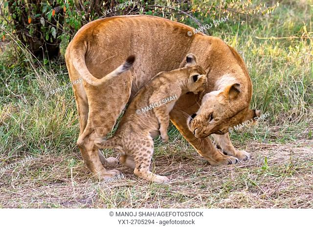 Cub interacting with mother