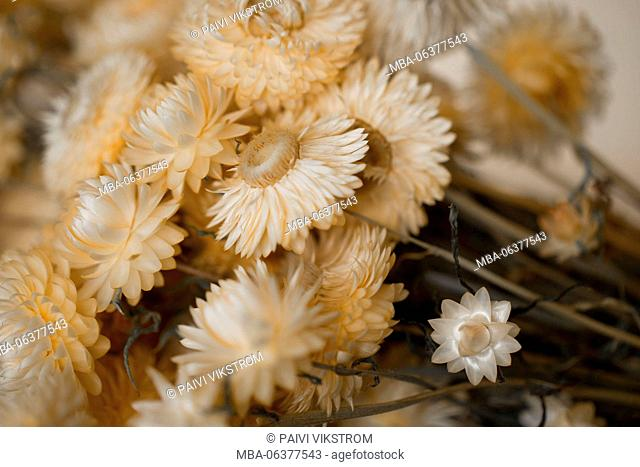 4 season autumn,beige,closeup,colorless,concept,countryside,decoration,dried,dry,flora,flower,garden,herb,idea,image,meadow,memory,nature,plant,rural,rustic
