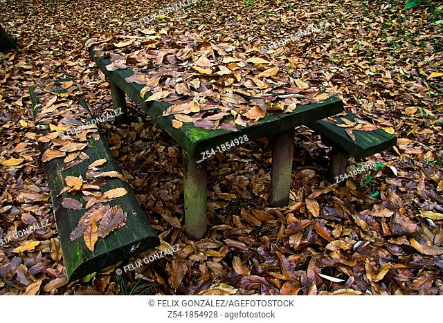 Table, benchs and chestnut leaves in autumn in a recreation area, Asturias