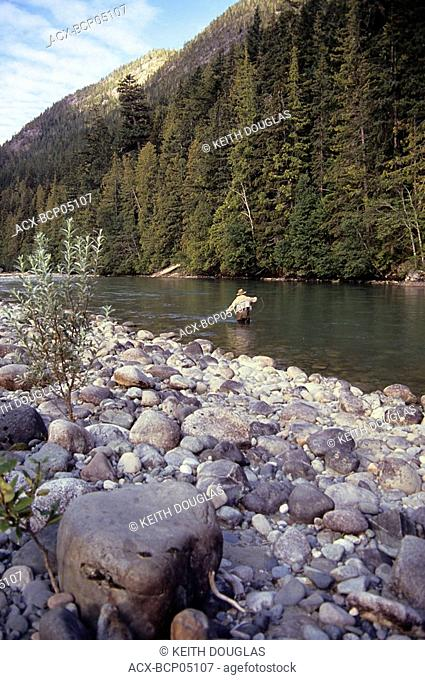 Flyfisherman casting for summer run steelhead, Dean river, British Columbia, Canada