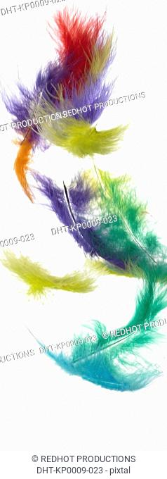 Coloured Feathers falling