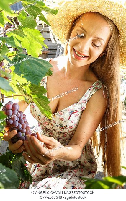 Woman harvesting grapes. Budapest, Hungary