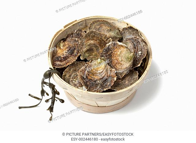 Fresh European flat oysters in a basket on white background