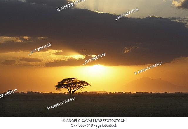 Kenya. Amboseli National Park